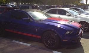 Mustang in Dubai college india american university